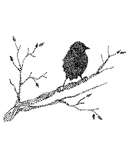 Bird on Branch Wood Mount Stamp M3-0390J