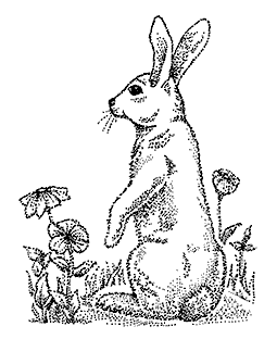 Curious Rabbit Wood Mount Stamp K2-0562H