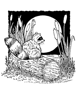 Nancy Baier Moonlight Raccoon Wood Mount Stamp P1-10471K