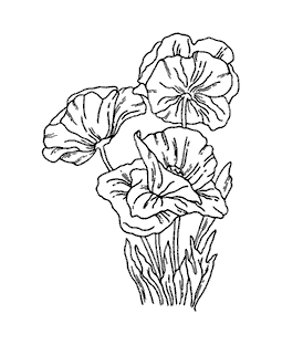 Poppies Wood Mount Stamp K5-0647H