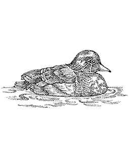 Nancy Baier Wood Duck Wood Mount Stamp K3-0610H