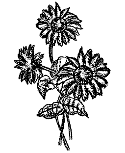 Sunflowers Wood Mount Stamp M1-10126J