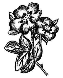 Wild Roses Wood Mount Stamp M4-10133K